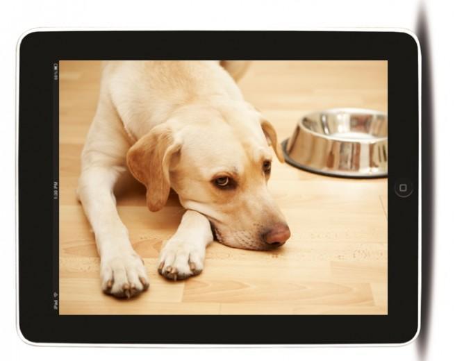 iPad perro